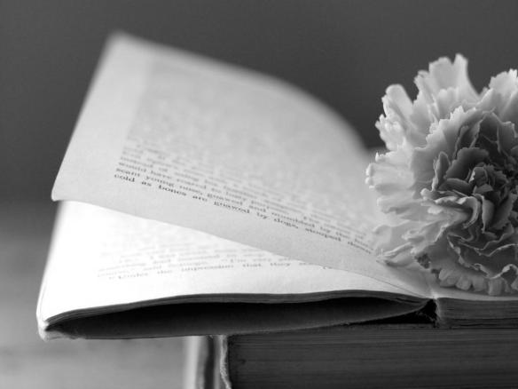 gray_book_and_flower_page_macro_abstract_hd-wallpaper-1270728